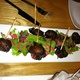 Bacon Wrapped Medjool Dates - Dish at Daniel's Restaurant &amp; Lounge