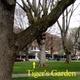 Tigers Garden - Vancouver, WA