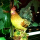 Former Earthenware Rooster Sculptures - Interior at Bistro Garden at Coldwater